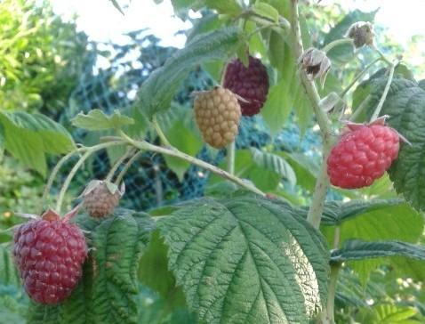 fruits du jardin à cancale
