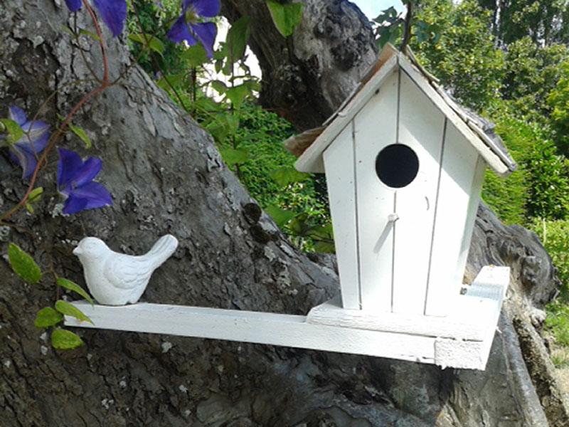 Cabane-oiseaux
